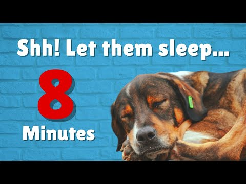 Shh! Let Them Sleep 💤 | Music To Help Your Dog Sleep Under 8 Minutes