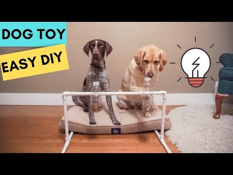Easy Dog BRAIN Games | Labrador & German Shorthaired Pointer