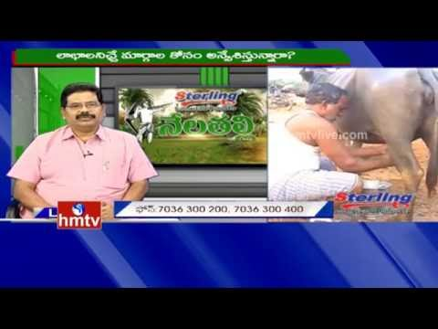 Dairy Farming Set Up Guide and Tips | Nela Talli | 17-08-16 | HMTV