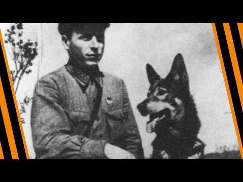 10 знаменитых СОБАК - ГЕРОЕВ Второй Мировой Войны!