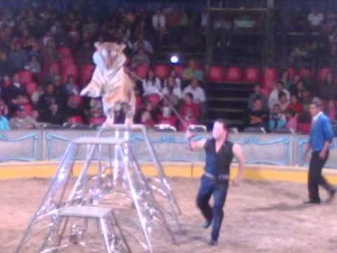circo mas grande y famoso - YouTube
