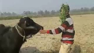 mqdefault Vadi Naya Katha