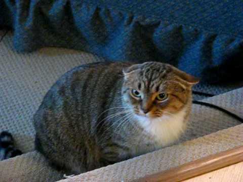 Kitty Hissing