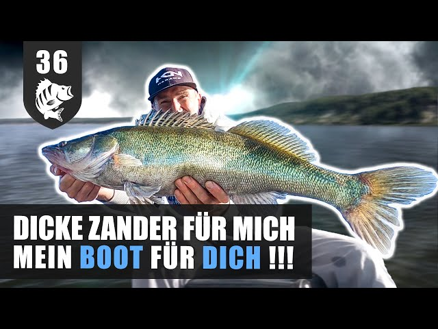 Grosse ZANDER in der ANGELBOOT-Lotterie (Mit Verlosung.)