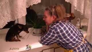 Как Той-терьер Джерри чуть кое-кому нос не откусил, но  кашу кушал и Ташу слушал.