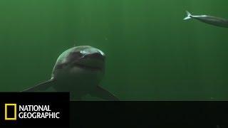 Czy rekiny Białe mogą zaatakować w płytkiej wodzie? [Arcytrudna Misja]