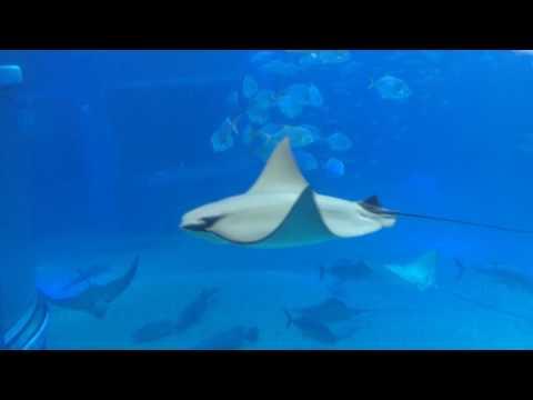 Whale shark - 3 views j