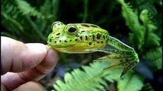 kayak bassin capt ken daubert designer bass frogs