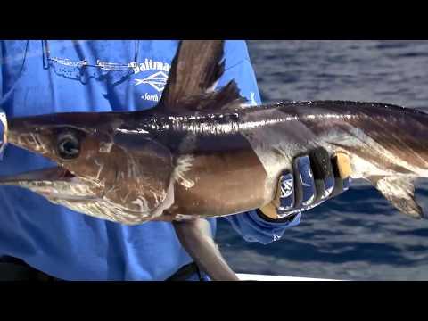 Episode 1: Texas Swordfish