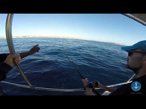 Deep Blue Charters Sydney - Reef Fishing Trip