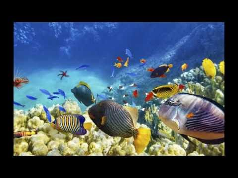 Fishes Singing In Chorus Recorded