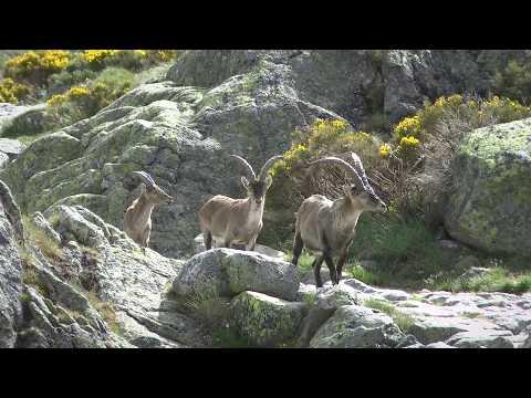 Birding Spain Extremadura 2015