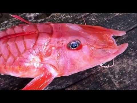Weird Fish Pink 7