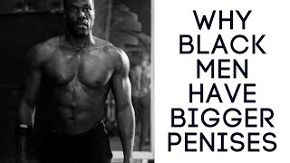 vuclip Why black men have bigger penises