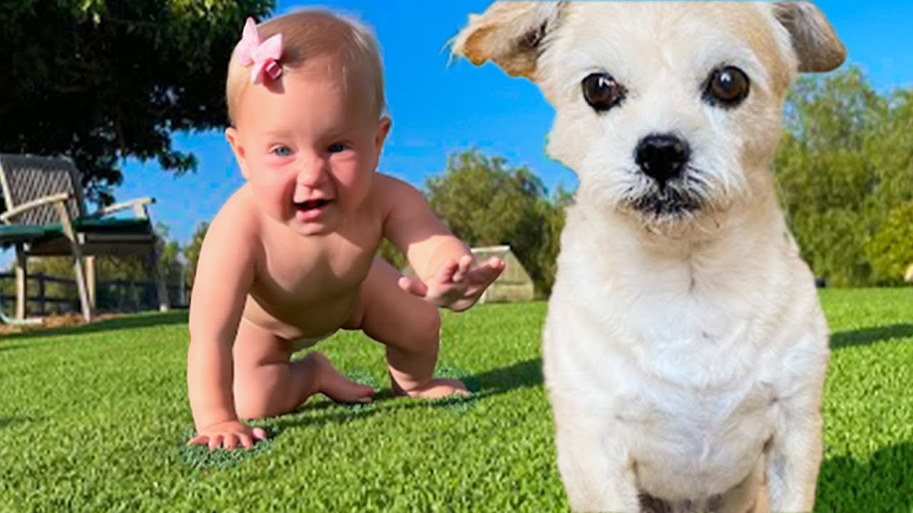 Dog teaches Baby how to crawl! 👶🐶[ ADORABLE ❤]
