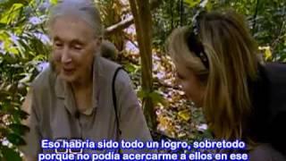 Científica Jane Goodall y sus Chimpancés. Entrevista por 60 Minutos 24-Oct-2010 (Sub al Español)