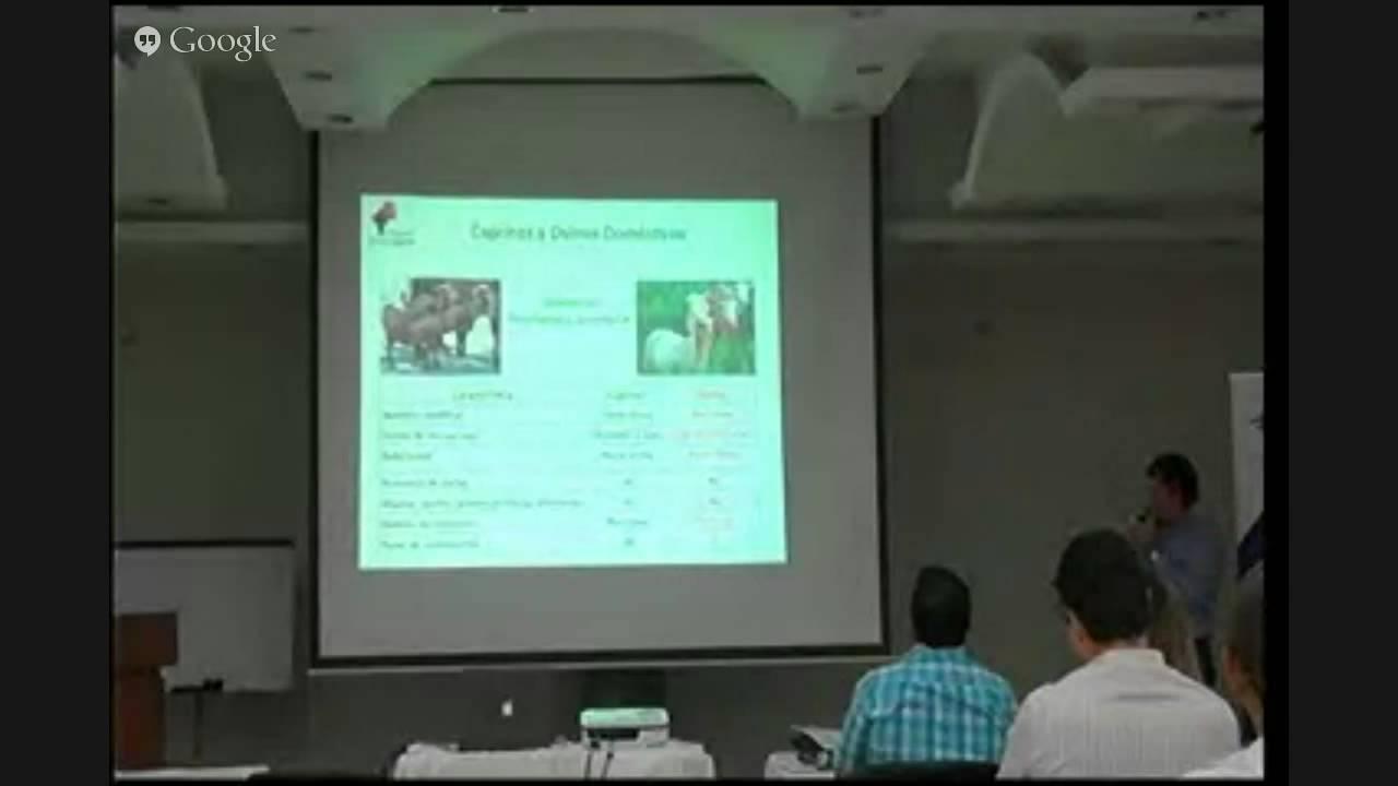 Anatomía digestiva de ovejas y cabras, Trópico Bajo. - YouTube