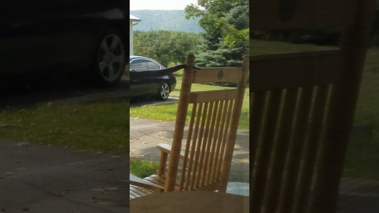 6 foot black snake on porch youtube