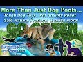 SwimmingPoolsForDogs.com: More Than Dog Pools - Tough Dog Toys, Pet Anxiety Relief, Natural Options