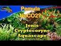 [Part 3 no Co2 ] 6 Jenis Cryptocorine Populer Sering dipakai