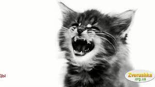 Корм для котят Роял Канин • Зоомагазин Zverushka.org.ua