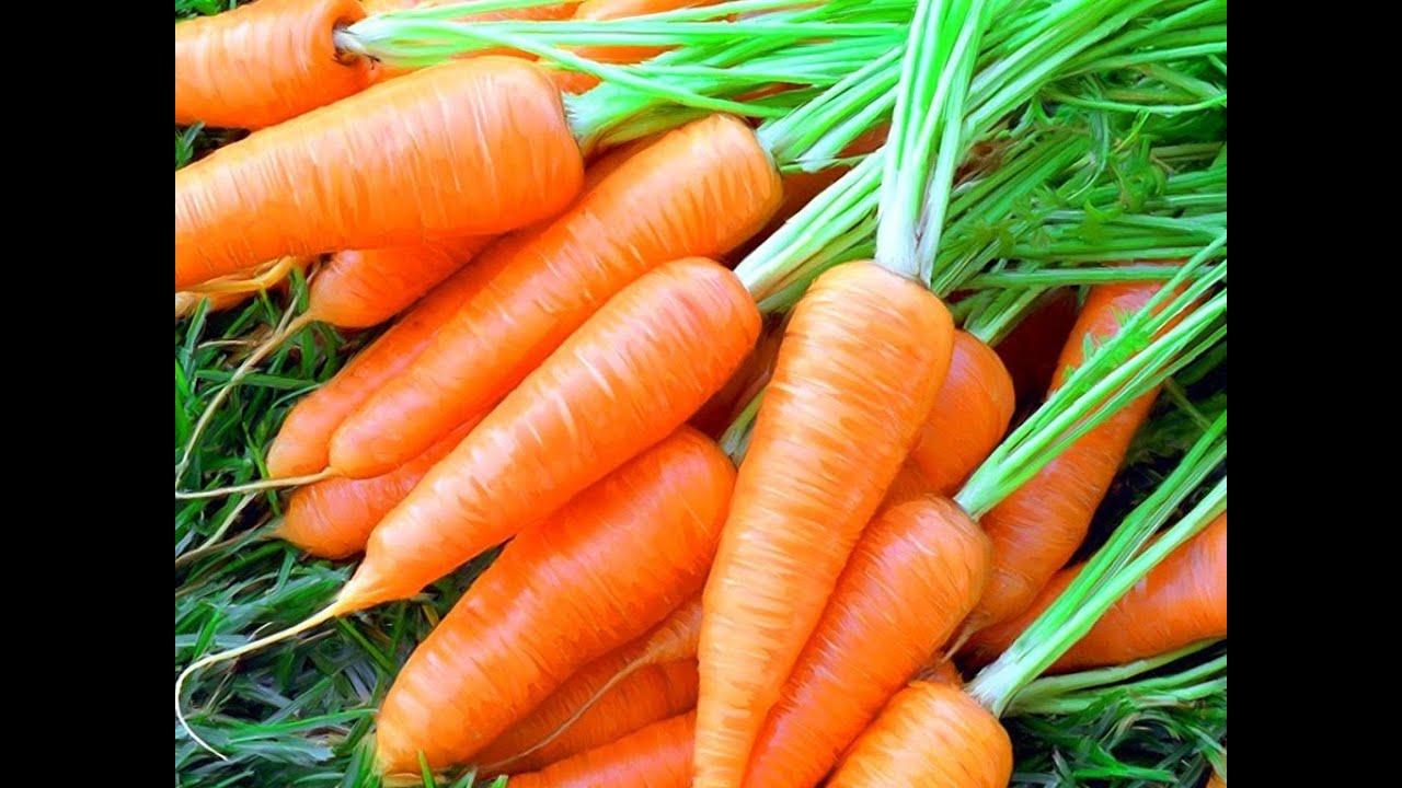 Сорт или гибрид: какие семена моркови лучше выбрать
