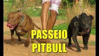 PASSEIO COM OS PITBULLS E A REAÇÃO DE AKIRA AO PASSEAR COM BARÃO