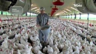 Tilly-Sabco : Les aviculteurs en grandes difficultés