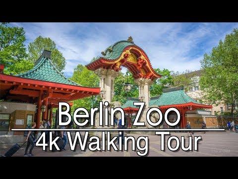 Walking Around Berlin Zoo   4k   Ambient Music