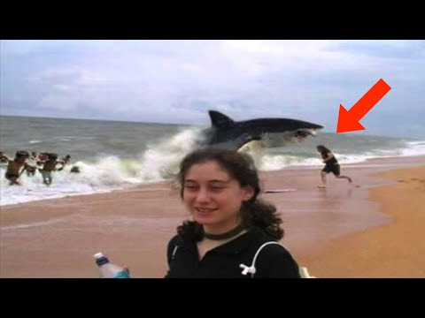 Top 15 Craziest Animal Attacks
