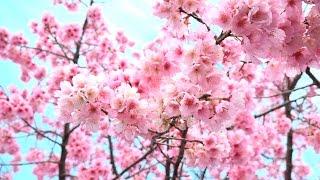 第35回「春がきた」