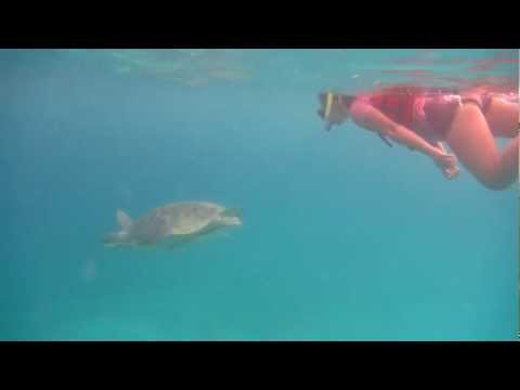 Club Paradise Sea Turtle 4