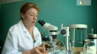 Пчеловодство. искусственное оплодотворение матки.avi(тонкая работа, сродни хирургической операции., 2011-10-26T18:38:28.000Z)