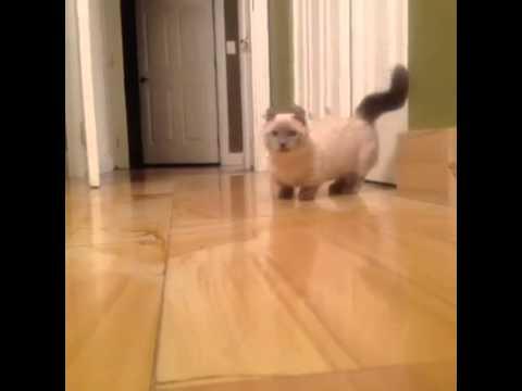 best vine vids midget cat youtube