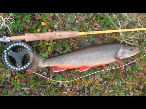 Finnmark 2009 - Arctic Fly Fish - - YouTube