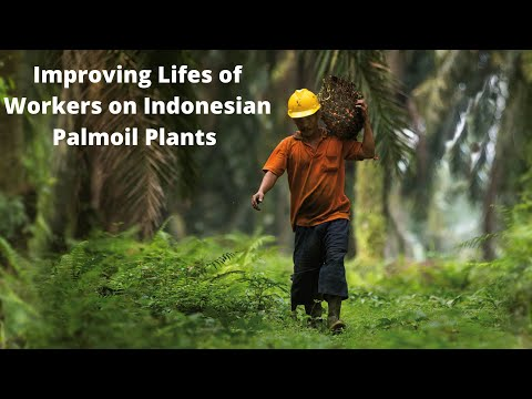 How to improve labour conditions in Indonesian palm oil plantations