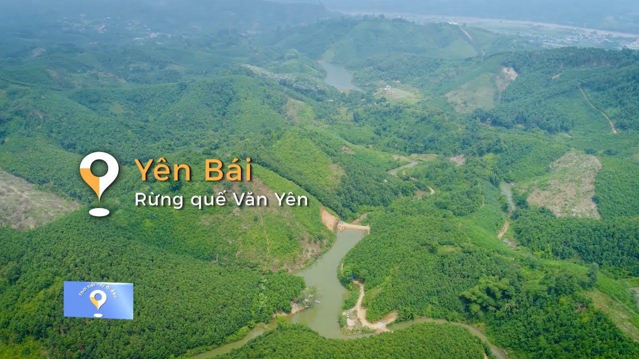 Thời tiết này đi đâu | Yên Bái - Rừng quế Văn Yên - YouTube