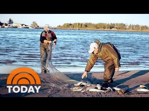 Dolphins Have Helped Brazilian Fishermen For Generations | TODAY