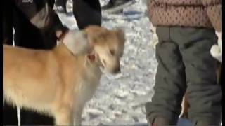 Барбосы в контакте. В Челябинске может появиться соцсеть для бездомных собак
