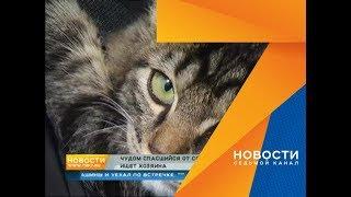 Двухмесячный котенок Люцифер чудом спасся от совы и ищет хозяина