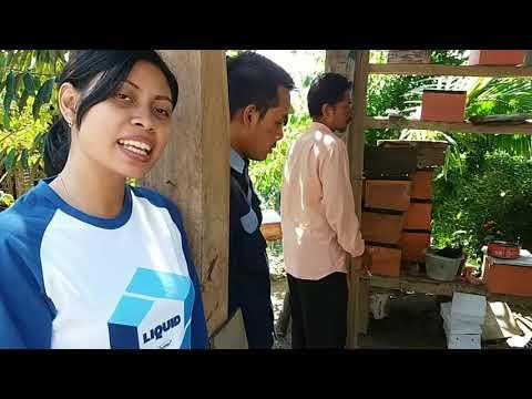 Cara Membuat  Kotak Lebah , SIMPLE DAN MUDAH!!! ~budidaya Lebah Apis CeranaCeran