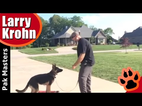Remote collar training with German Shepherd PUPPY | E collar | DAY3