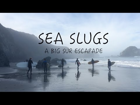 Sea Slugs: A Big Sur Escapade