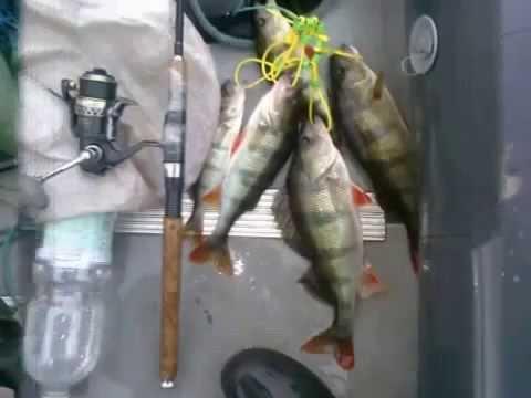 Ловля судака на живца/Fishing for live bait