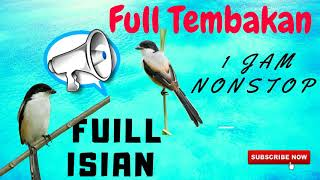 Masteran Cendet Full Isian Durasi Panjang mp3 | Masteran Burung Cendet Juara