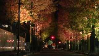 今年も夜の金沢で紅葉のライトアップが始まりました。 しいのき迎賓館横...