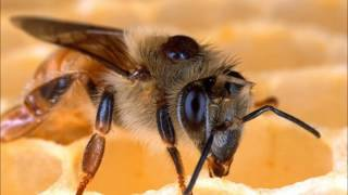 How to Determine Varroa Infestation Levels in Hives.