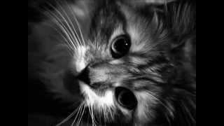 Чёрные кошки#