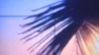 Coco Bryce - Polaroid Sunset