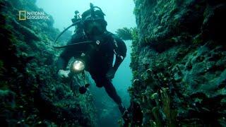 Podwodne koralowe słupy to największa tajemnica tego miejsca [Zaginione miasta]